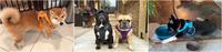 Магазин DOGS ACTIVE профессиональная амуниция для собак - Страница 5 22797552_s