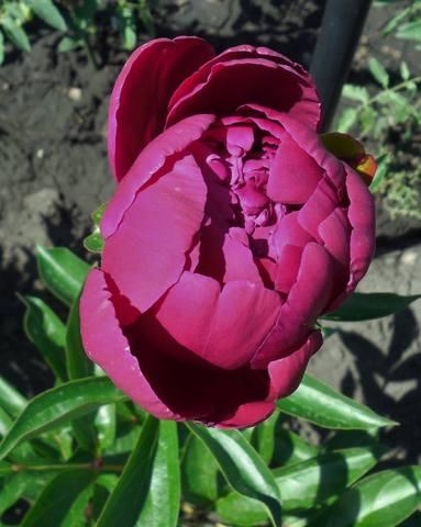 Продам растения 22930941_m