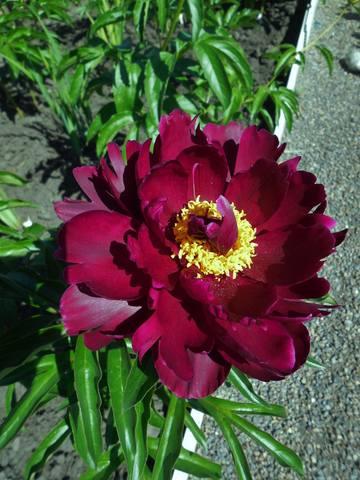 Продам растения 22930959_m