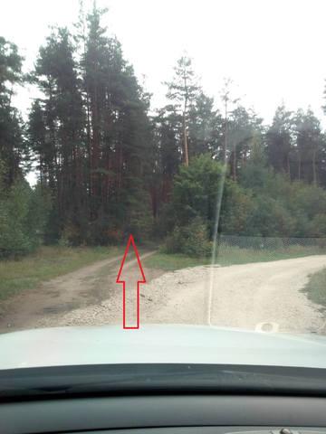 25 августа, Motive Gear Swamp Way, Воскресенский р-н, Московской обл. 22992080_m