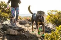 Магазин DOGS ACTIVE профессиональная амуниция для собак - Страница 5 23421429_s