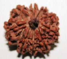Плоды магического дерева рудракша 23586381_m