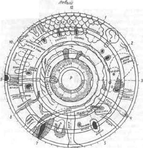 Физиологическая основа нашей жизни 25238193_m