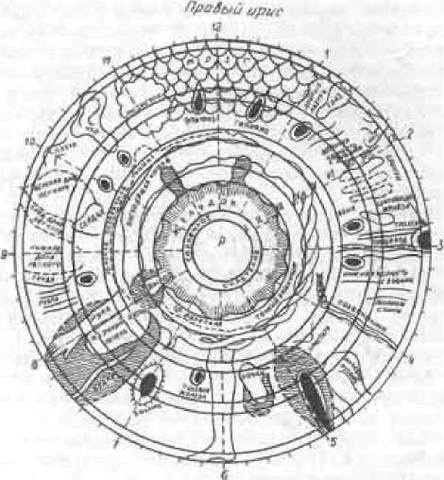 Физиологическая основа нашей жизни 25238194_m