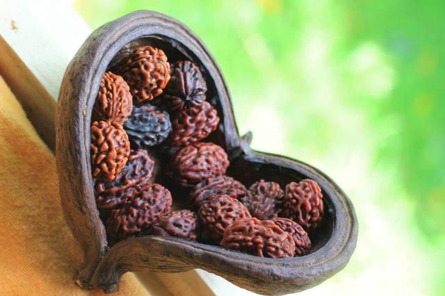 Плоды магического дерева рудракша 25767849_m