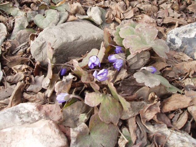 Весна идет!!! - Страница 9 26265011_m