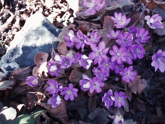 Весна идет!!! - Страница 10 26438913_m