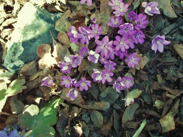 Весна идет!!! - Страница 10 26438924_m