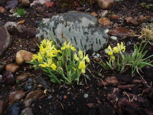 Весна идет!!! - Страница 13 26636034_m