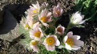 Весна идет!!! - Страница 14 26766560_s