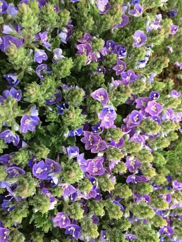 Весна идет!!! - Страница 14 26775953_m