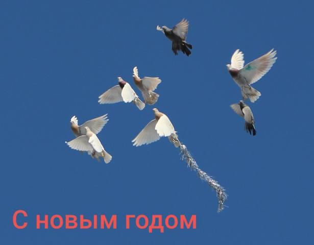 Поясная бойная Казахстана. Скобачи - Страница 16 29164020_m