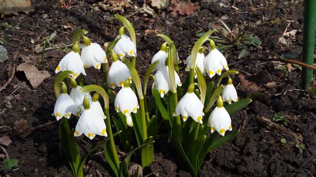 Весна идет!!! - Страница 15 30277431_m