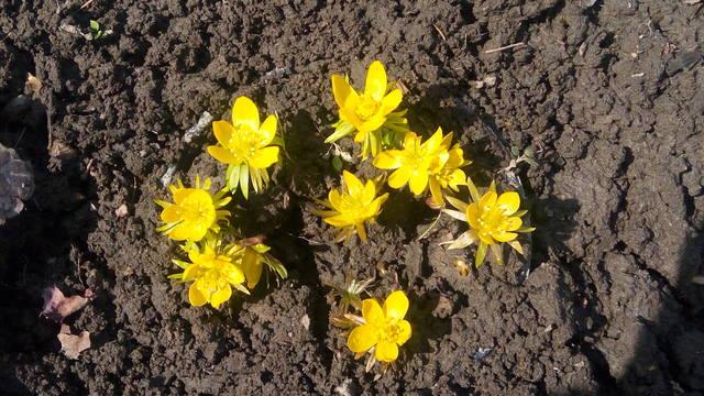 Весна идет!!! - Страница 15 30277458_m