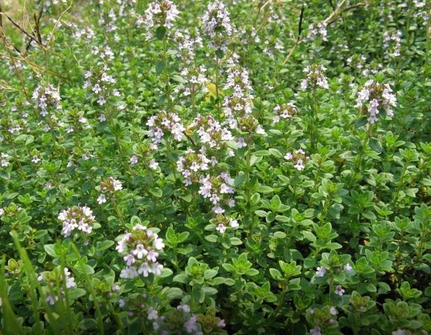 Цветы, деревья, садоводство!  - Страница 7 30470722_m