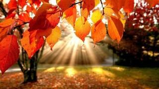 Осень, не нужно плакать... 31510572_m
