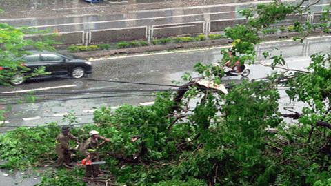 Cận cảnh bão số 1 qua ảnh Images2000912_3