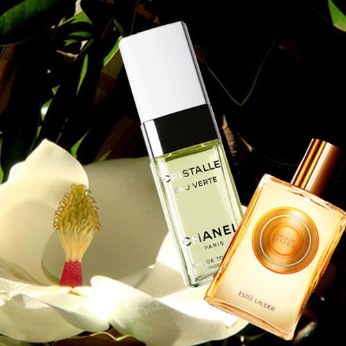 I profumi dell'estate Magnolia