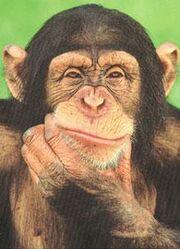 Shrek existió! - Página 3 180px-Chimpance