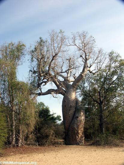 هموم انسان على جدار الصمت Baobabs0002