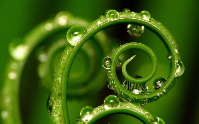 Transmutation..... à la recherche de la paix intérieure ..... ( 4 ) - Page 2 161054_green-nature-water-drops-macro-1680x1050-wallpaper_www.wall321.com_26
