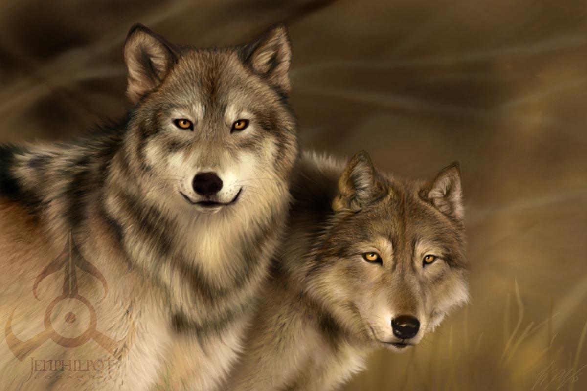 Bienvenidos al nuevo foro de apoyo a Noe #329 / 07.09.16 ~ 21.09.16 Wolves-wolves-1170832_1200_800