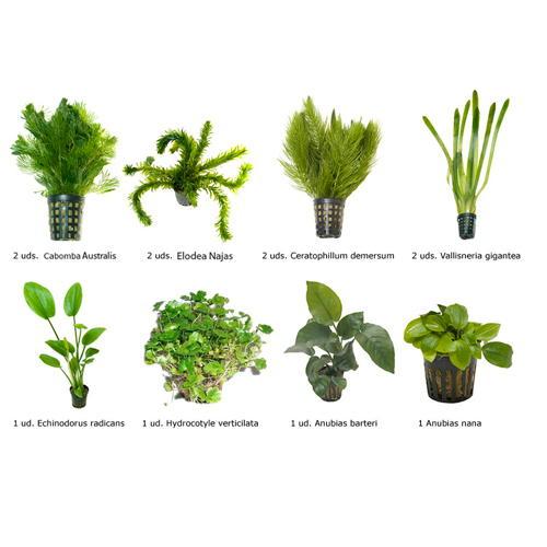 Plantado Low Tech Plantas_grupo_1