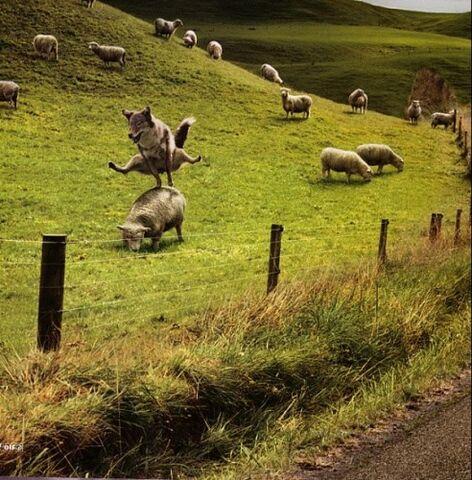 21 DECEMBRE 2012 - Compte-à-rebours - Page 27 472px-Saute-mouton