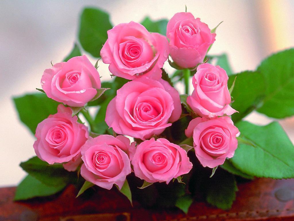 Trendafila - Faqe 12 The-Rose-of-Love-roses-13967150-1024-768