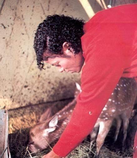 Raridades: Somente fotos RARAS de Michael Jackson. - Página 4 Mj-xxx-the-thriller-era-9005522-438-504