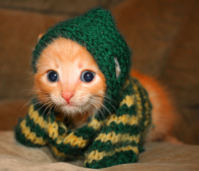 """An innocent kill"" Cute-kitten-cats-6987468-670-578"