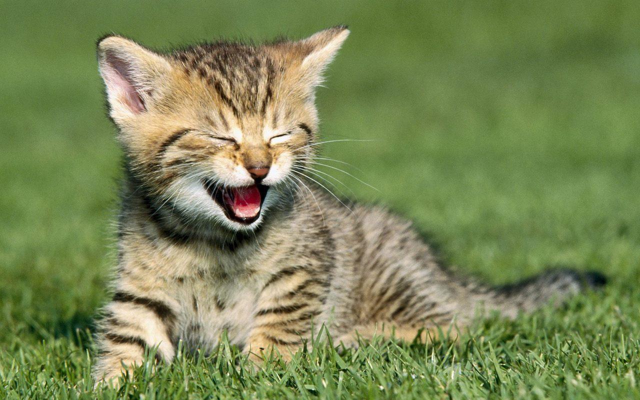 The Kawaii Game! Cute-Kitten-kittens-16123158-1280-800