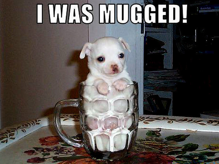 Funny/Cute Animal Pics - Page 2 Dog-funny-animal-humor-20158126-700-525