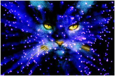 The Game Section Starclan-warrior-cats-club-23147083-400-265