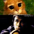 Love Never Dies - Página 14 Cute-Funny-Damon-damon-salvatore-25504621-120-119