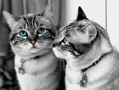 les chats!! Y7ck4k3r