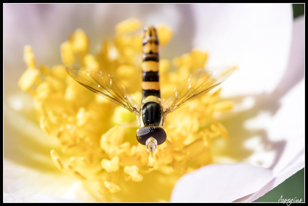 Macro Sud  2019 9ème Ed. - 1er Juin - Page 5 Insecte_01