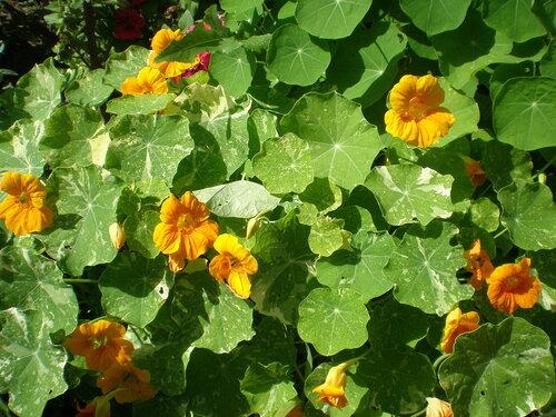 Однолетние растения 0_2a650_b4617939_L
