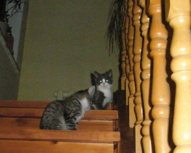 Кому коты? 0_15af1a_e538bc0b_XL