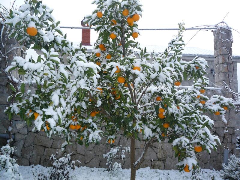 А за окном зима... 0_812c1_f4f0d82c_XL
