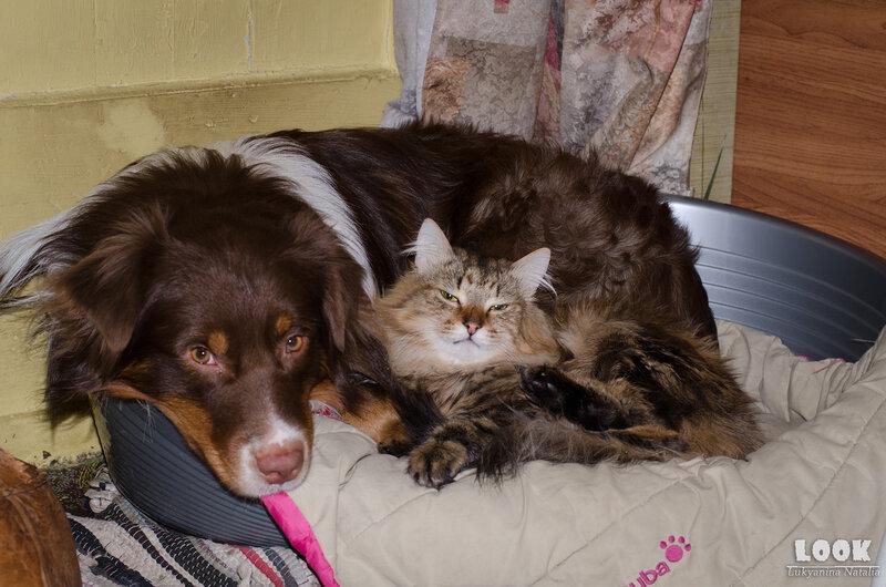 аусси и кошка - Страница 4 0_8ac89_d4108603_XL