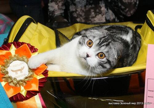 """Международная выставка кошек """"Удивительные кошки"""", 5-6 октября 2013, г. Сургут, ХМАО - Страница 2 0_c9ec5_c3ae1315_L"""