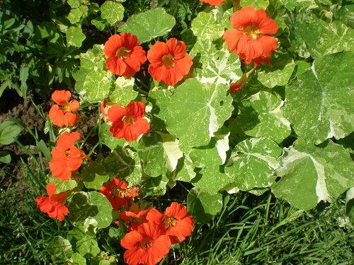 Однолетние растения 0_2a64f_f02e4bdf_L
