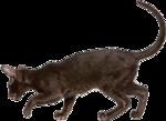 *Здоровое и радостное животное в доме* 0_77010_3e0d5a2d_S