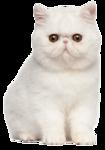 *Здоровое и радостное животное в доме* 0_77017_611b22c3_S