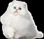 *Здоровое и радостное животное в доме* 0_77018_32a4de6c_S