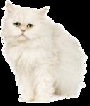 *Здоровое и радостное животное в доме* 0_76fba_eb173680_S