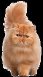 *Здоровое и радостное животное в доме* 0_77015_28019a83_S