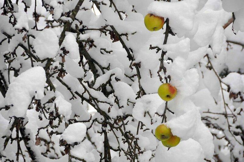 А за окном зима... 0_8128c_e9a279f5_XL
