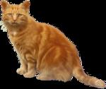*Здоровое и радостное животное в доме* 0_4b3ff_cf56fbed_S